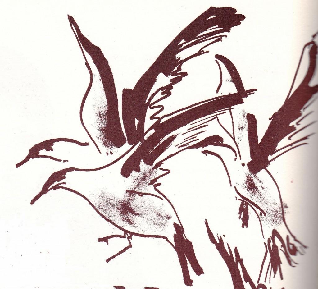 Vol de sternes par Raymond Scuiller (ill. de Scrafic d'Auguste Dupouy)